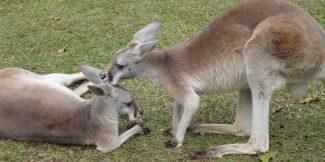 année de césure Australie