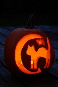 pumpkin-1005011_1920