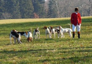 Chiens de chasse - Boxing Day - Easy Bilingue